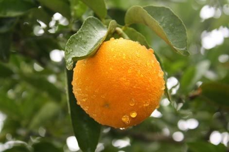 laranjalimaa